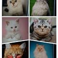 Photos: collage-1590483437772