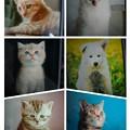 Photos: collage-1590567868750