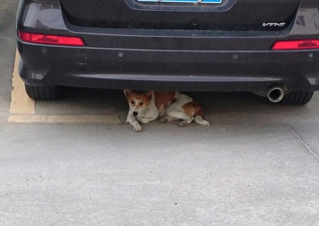 車の下が良い?
