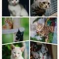 Photos: collage-1593213308678