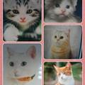 Photos: collage-1593246878314