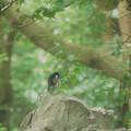 Photos: 毛繕い四季鳥