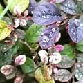 雨が~小粒の真珠なら