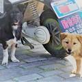 Photos: 自由犬