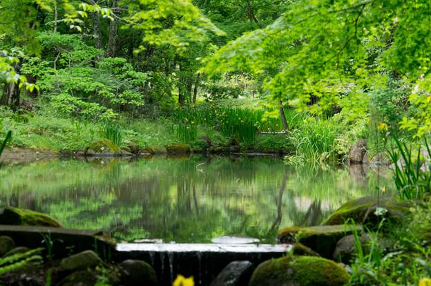日本の夏-01568