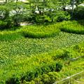 Photos: 馬陵城(相馬中村城)-01643-3