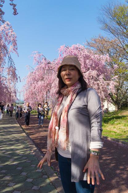 日中線記念遊歩道枝垂桜-3