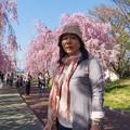 写真: 日中線記念遊歩道枝垂桜-3