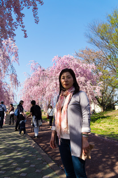 日中線記念遊歩道枝垂桜-4