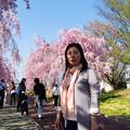 写真: 日中線記念遊歩道枝垂桜-4