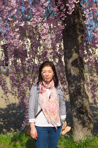 日中線記念遊歩道枝垂桜-7