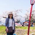 観音寺川桜-22