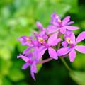 花の上のクリオネ