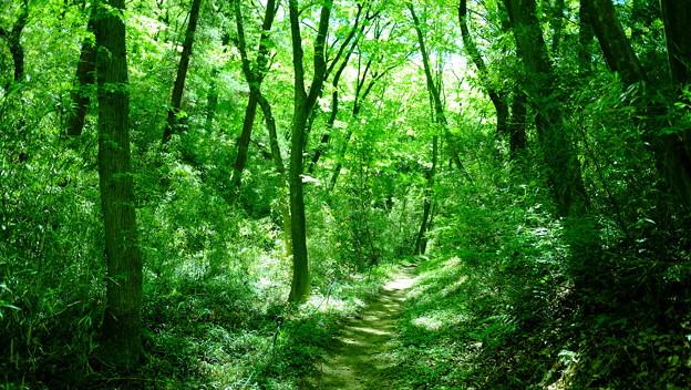 木漏れ日林道