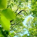 写真: 緑の屋根