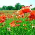 Photos: はためく花たち