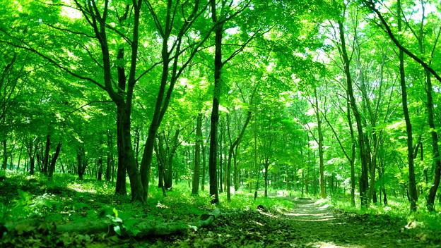 林道散策2