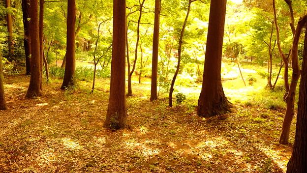 黄金色の庭