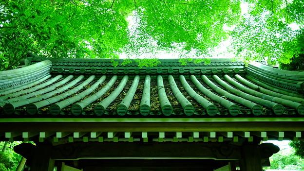 緑香る山門