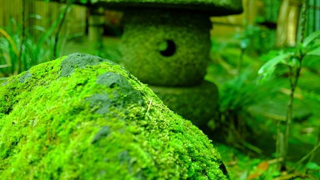 苔むす岩と