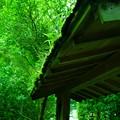 Photos: 草の屋根