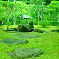 Photos: 苔むす庭