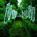 Photos: 苔階段