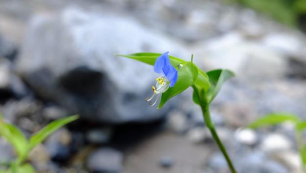 岩の隙間に咲く花