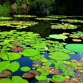 Photos: 彩の池