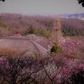 Photos: 梅の里