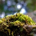 Photos: 小さな森