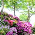Photos: 春の午後