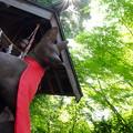 Photos: 森のお稲荷様
