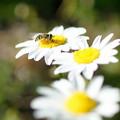 写真: 花