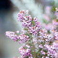 USJ パークの花