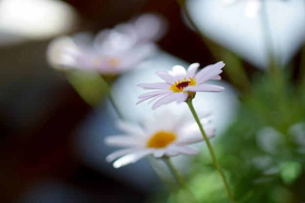 季節の花 春