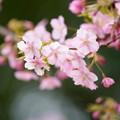 Photos: もうすぐ春 ピンク