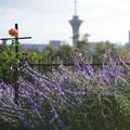 Photos: 緑地公園