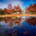 秋 紅葉 緑地公園散歩