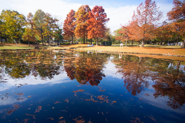 Photos: 秋 紅葉 緑地公園散歩