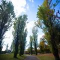 緑地公園散歩