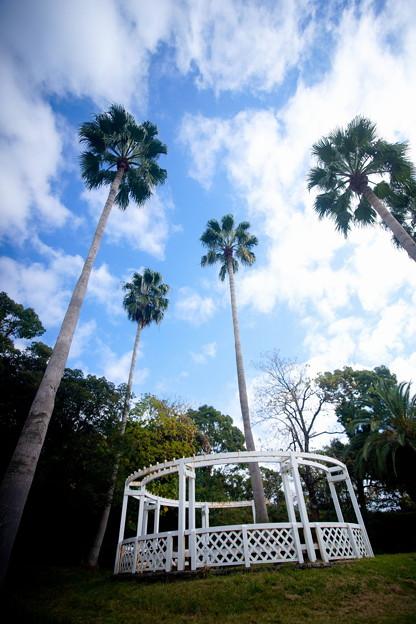 秋 緑地公園散歩 鶴見緑地国際庭園 スリランカ