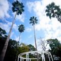 Photos: 秋 緑地公園散歩 鶴見緑地国際庭園 スリランカ