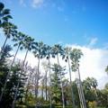 秋 緑地公園散歩 鶴見緑地国際庭園