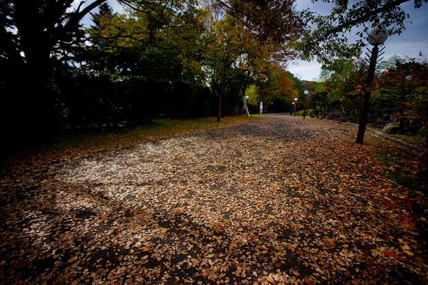 秋 緑地公園散歩