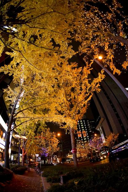 大阪梅田 夜のイチョウ並木