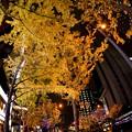 Photos: 大阪梅田 夜のイチョウ並木