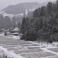 Photos: 早川
