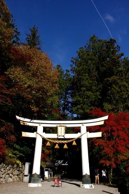 Photos: 宝登山の白い鳥居