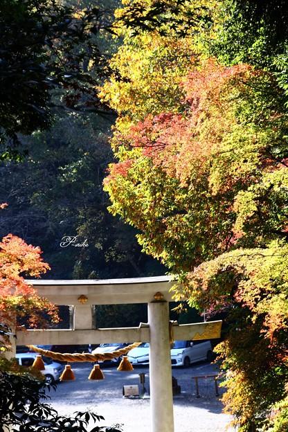 Photos: 鳥居と紅葉